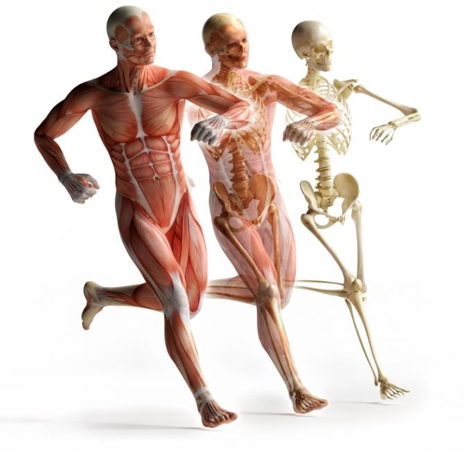 Eight Fascinating Facts About Fascia - Fit N Pilates